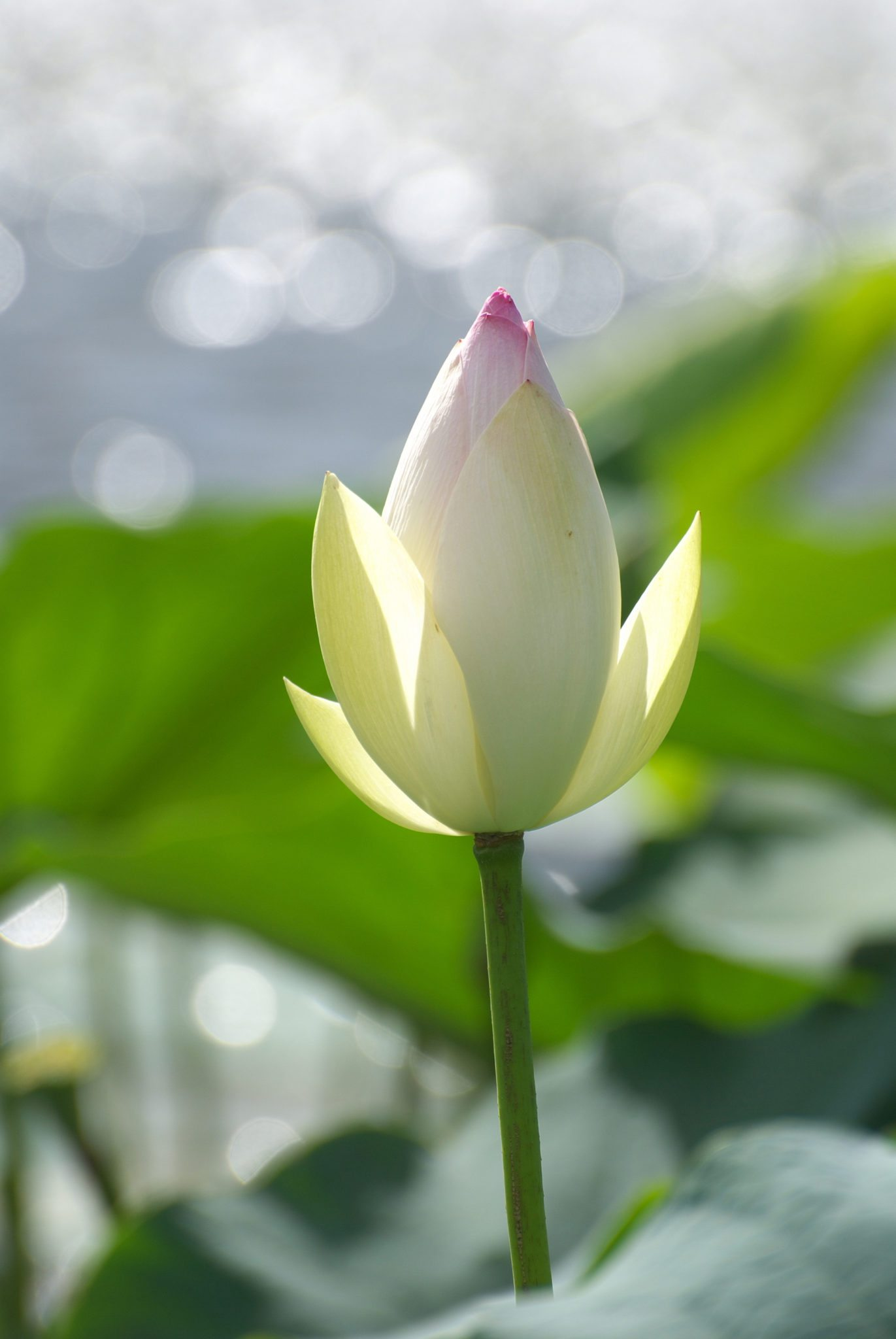 Frauen Qigong Blüte